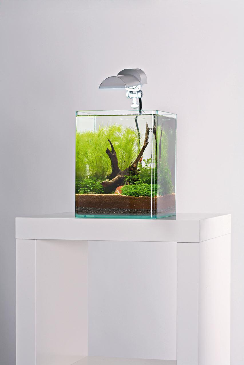 Jardin aquatique miniature