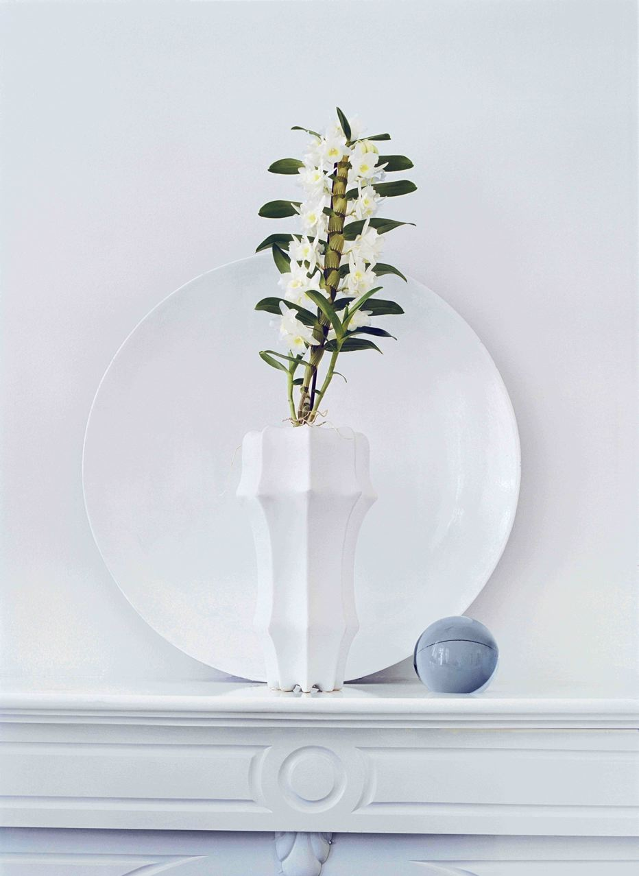 Orchidée plante d'intérieur