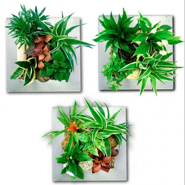 Le classique trio de tableaux vegetaux, création Small Garden