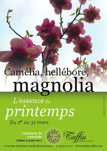 Camélia, hellébore, magnolia L'essence du printemps