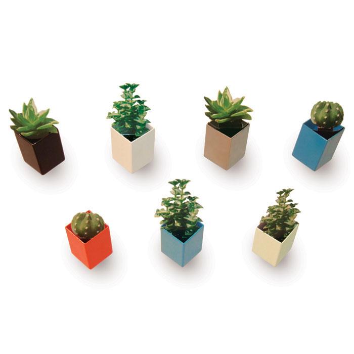 Plantes d'intérieur en suspension