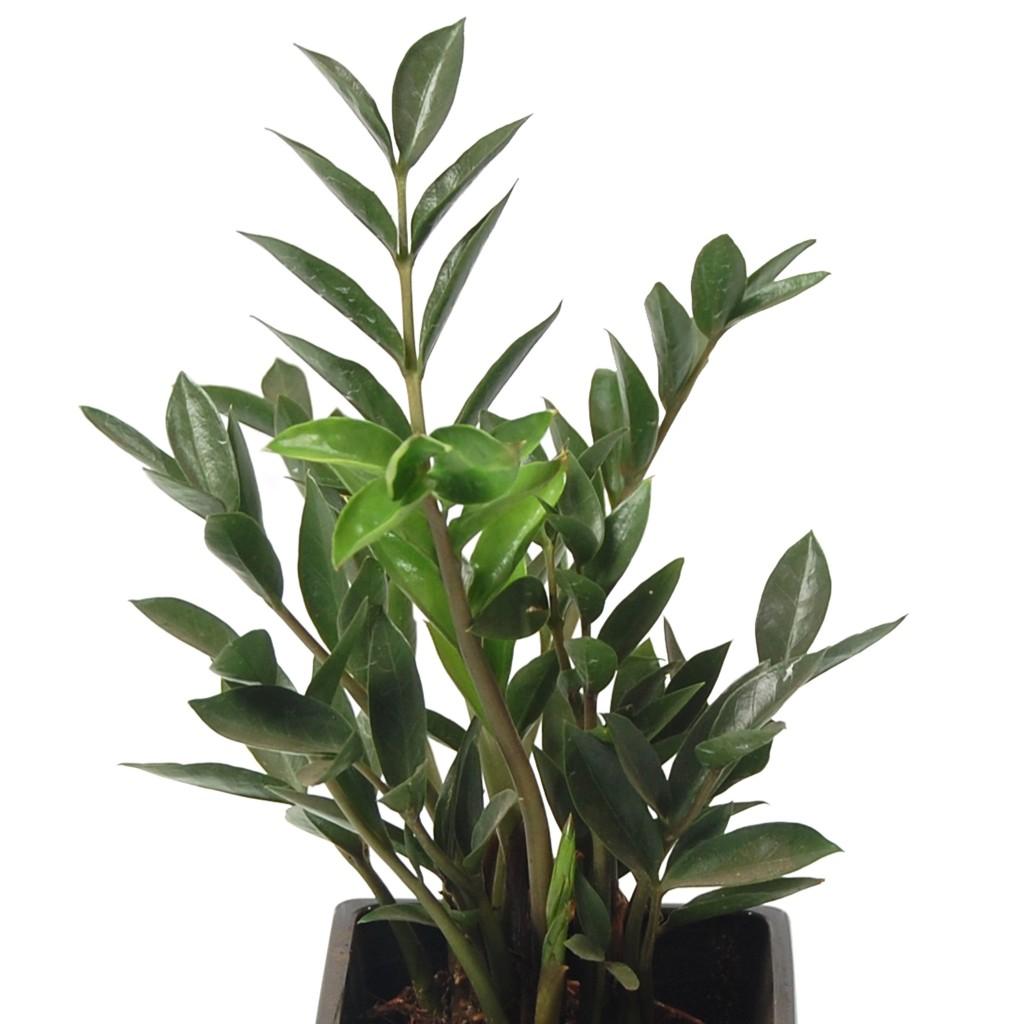 Plante verte d'intérieur